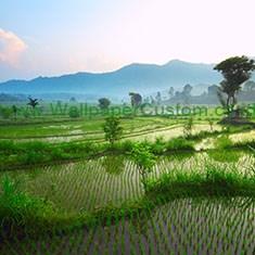 landscape 0020